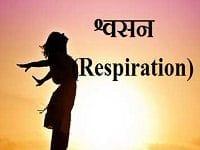 श्वसन (Respiration) किसे कहते हैं?