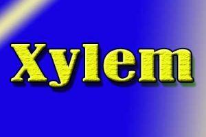 जाइलम Xylem क्या है?