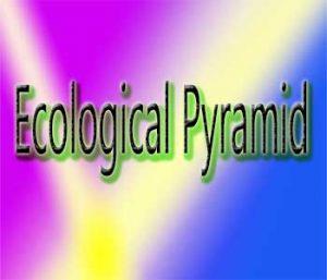 पारिस्थितिक पिरामिड क्या है?